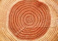 树木年轮图片(24张)