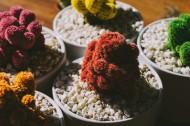 各种各样的可爱盆栽图片(15张)