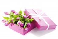 漂亮的郁金香图片(15张)