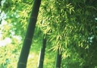 夏日的竹林图片(17张)