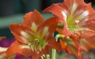 婀娜多姿的鲜花图片(13张)