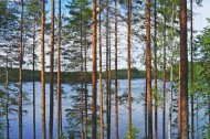 挺拔的松树图片(15张)