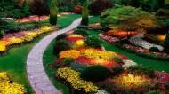 美丽的花园图片(8张)
