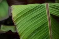 棕榈树叶子图片(11张)