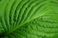 绿色的叶子图片(12张)