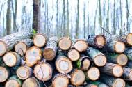 被砍伐的树木图片(15张)