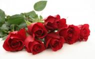 玫瑰图片(20张)