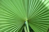 棕榈树叶子图片(10张)