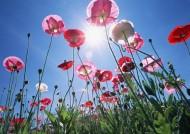 蓝天与鲜花图片(48张)