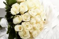 白玫瑰图片(40张)
