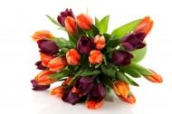 漂亮的郁金香鲜花花束图片(15张)