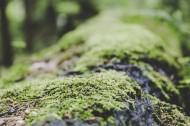 绿幽幽的苔藓图片(12张)