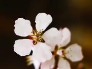 春日桃花图片(7张)