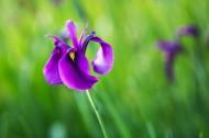 玉禅花图片(6张)