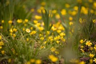 不知名的野花图片(7张)
