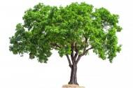 树木植物图片(15张)