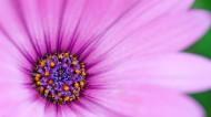 花瓣微距图片(31张)