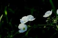 不知名的白色小野花图片(6张)