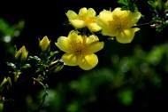 蔷薇花开图片(8张)