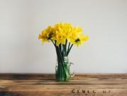 漂亮的水仙花图片(11张)