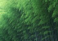 炎炎夏日里的一抹清凉竹林图片(17张)
