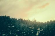 远处的松树林图片(15张)