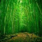 幽静的竹林图片(7张)