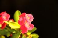 高光下的小红花图片(5张)