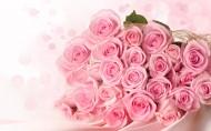 粉色玫瑰图片(8张)