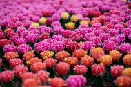彩色的仙人掌图片(10张)