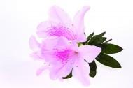 花朵特写图片(41张)