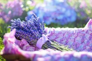薰衣草花束图片(10张)