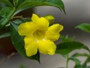 黄婵图片(11张)