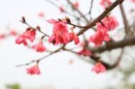 美丽的桃花的图片(9张)