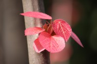 稚嫩的红叶图片(15张)