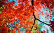 香山红叶图片(14张)
