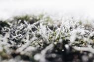 早霜覆盖草地的图片(10张)