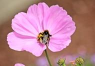花卉新品种之太空花图片(15张)