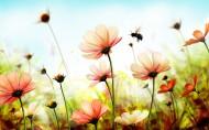 简约唯美的花卉图片(10张)