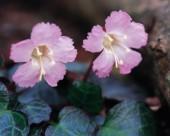 粉色系野花图片(15张)