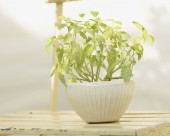 盆栽盆景图片(36张)