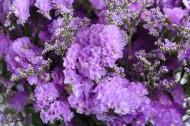 漂亮的紫色干花图片(12张)