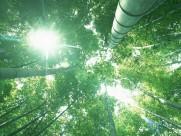 茂密竹林图片(21张)