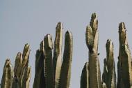 仙人掌高清图片(18张)