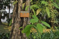 琴木植物图片(4张)