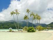 椰树图片(30张)