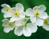 美丽的白色野花图片(12张)