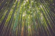 挺拔的竹子图片(15张)