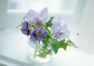 家居清新花束图片(34张)
