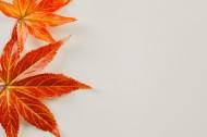 秋天红色枫叶图片(15张)